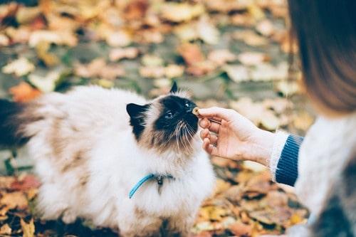 Foder til kæledyr - overvej at sælg det på abonnement